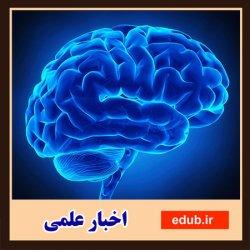 هوای مغزتان را داشته باشید